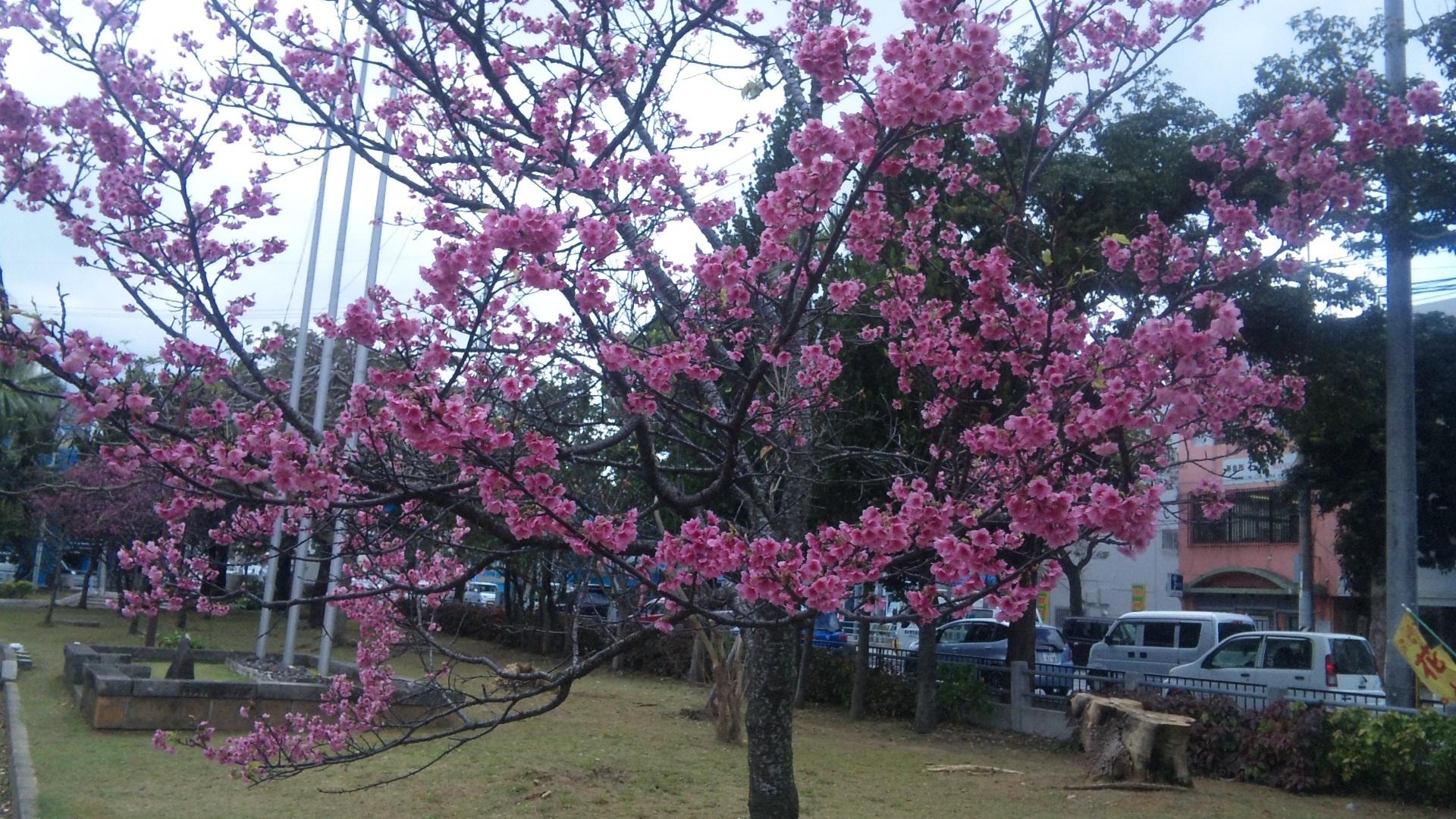 sakuramatsuri02.jpg