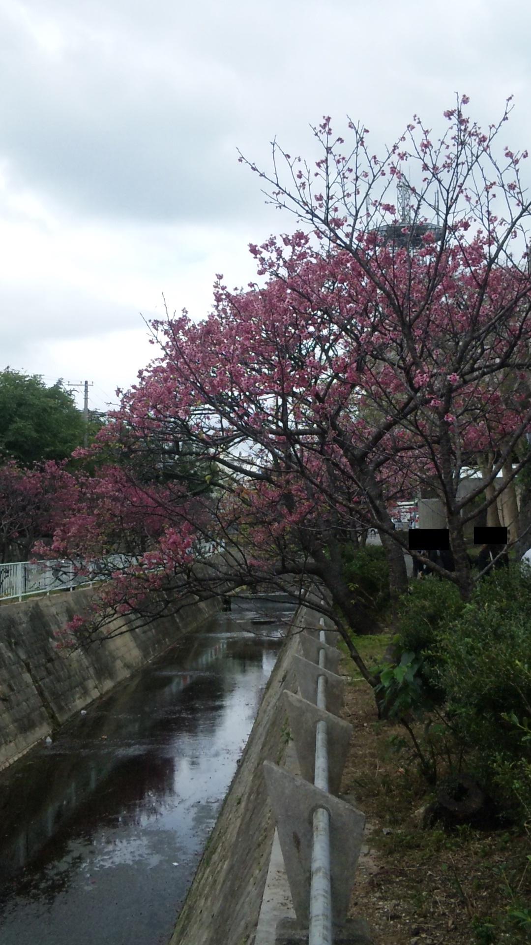 sakuramatsuri03.jpg
