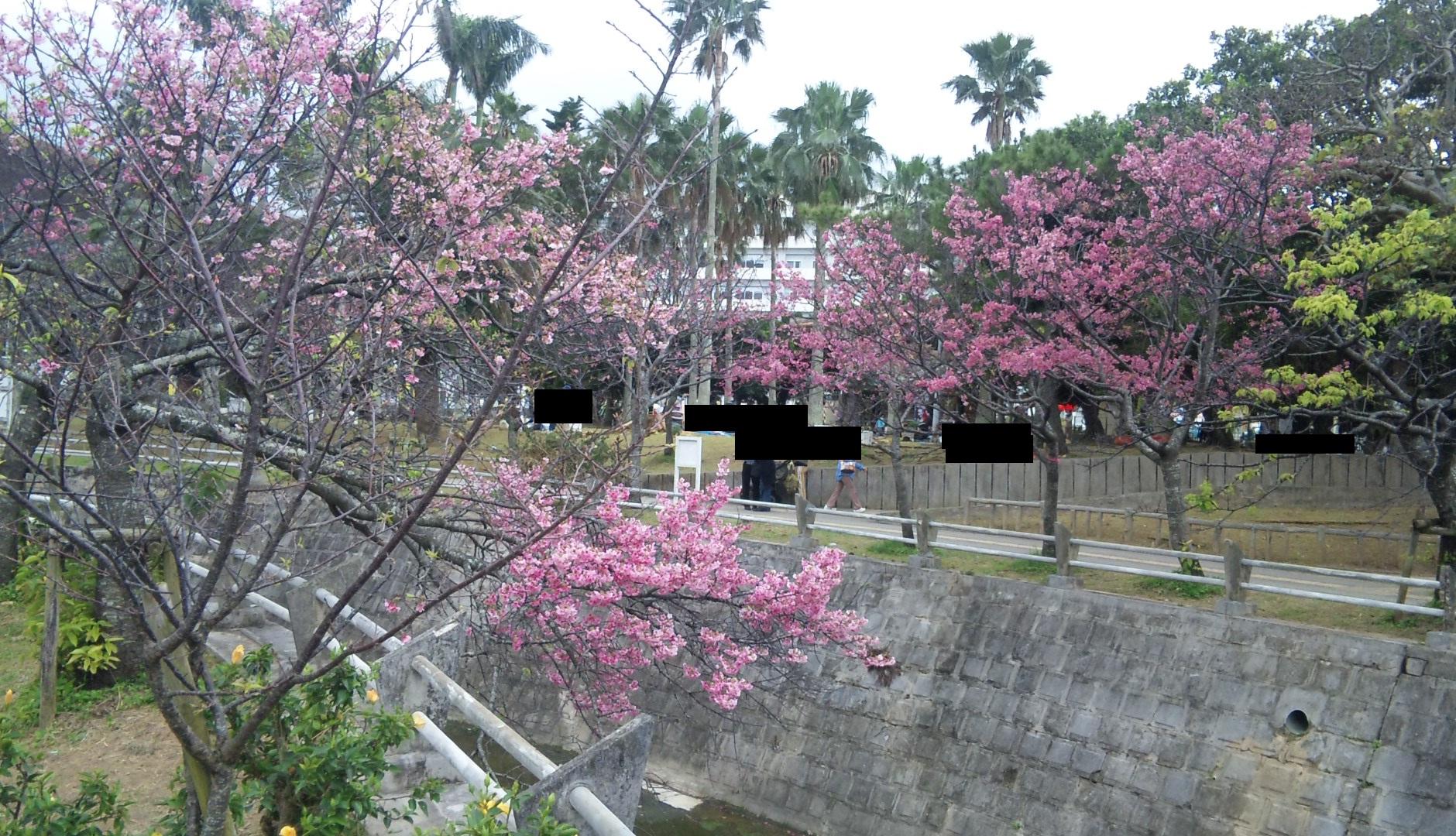 sakuramatsuri04.jpg